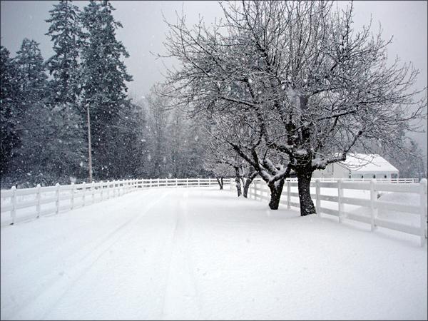 a_wintery_scene_by_cherrylipstick